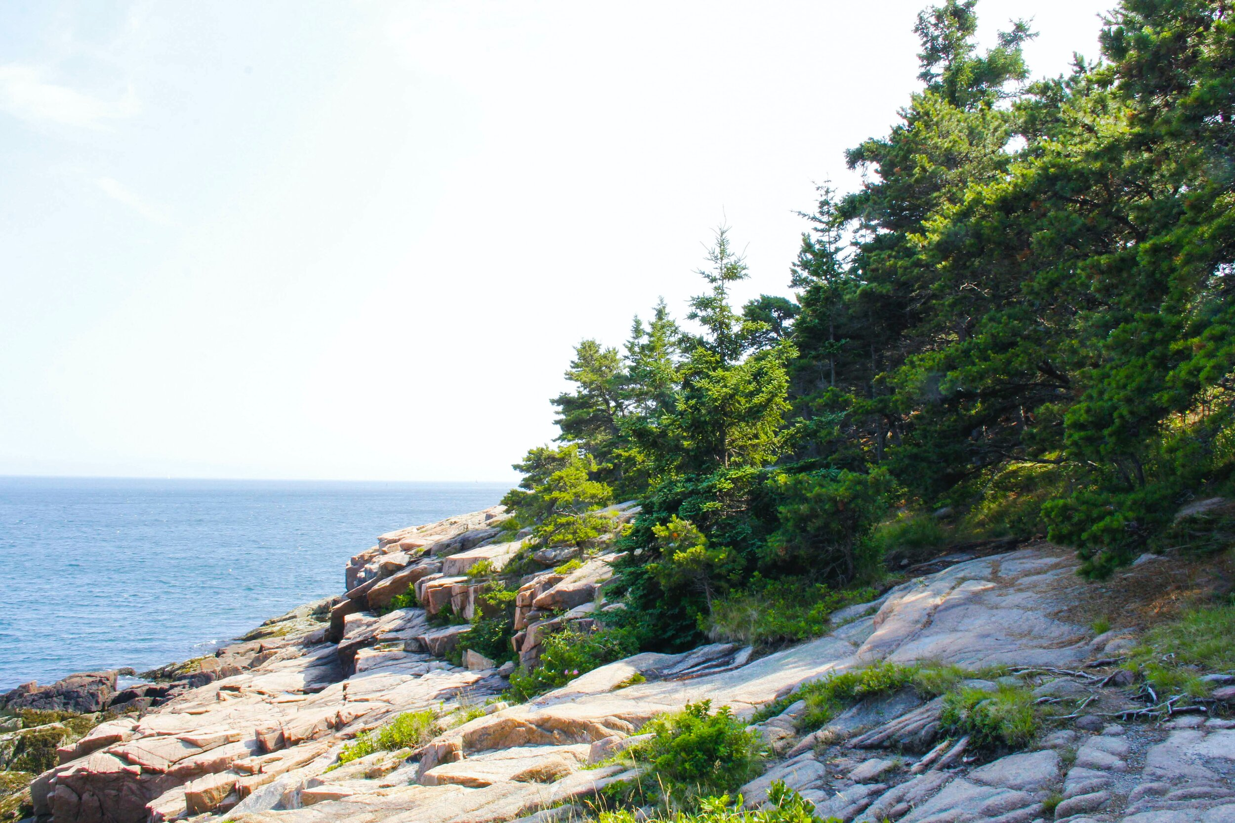 Downeast Nature Tours